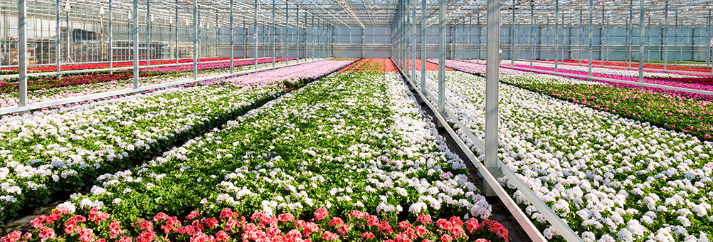 Horticulture-Solutions-to-suit-your-business-Divatec